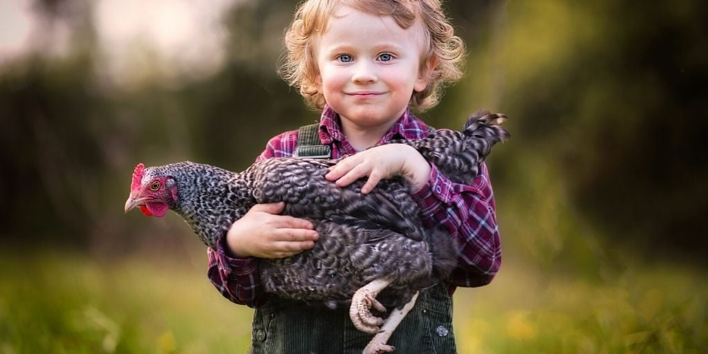 boy holding pet chicken