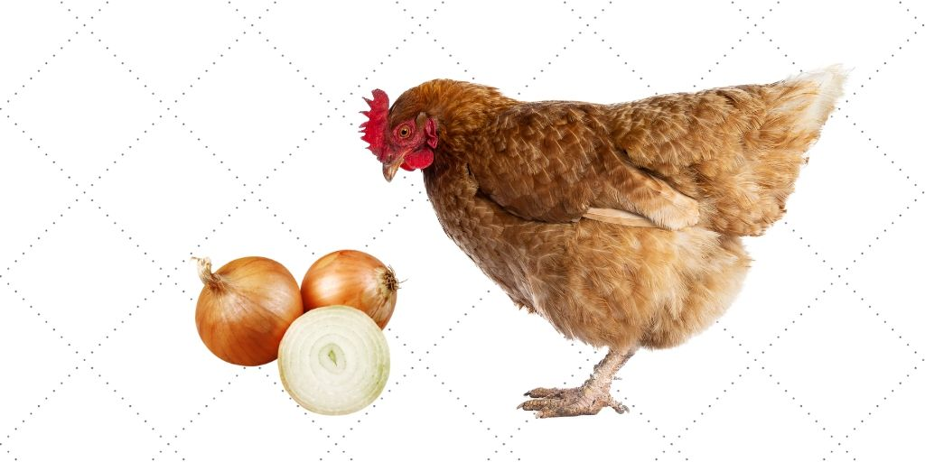 can chickens eat onion