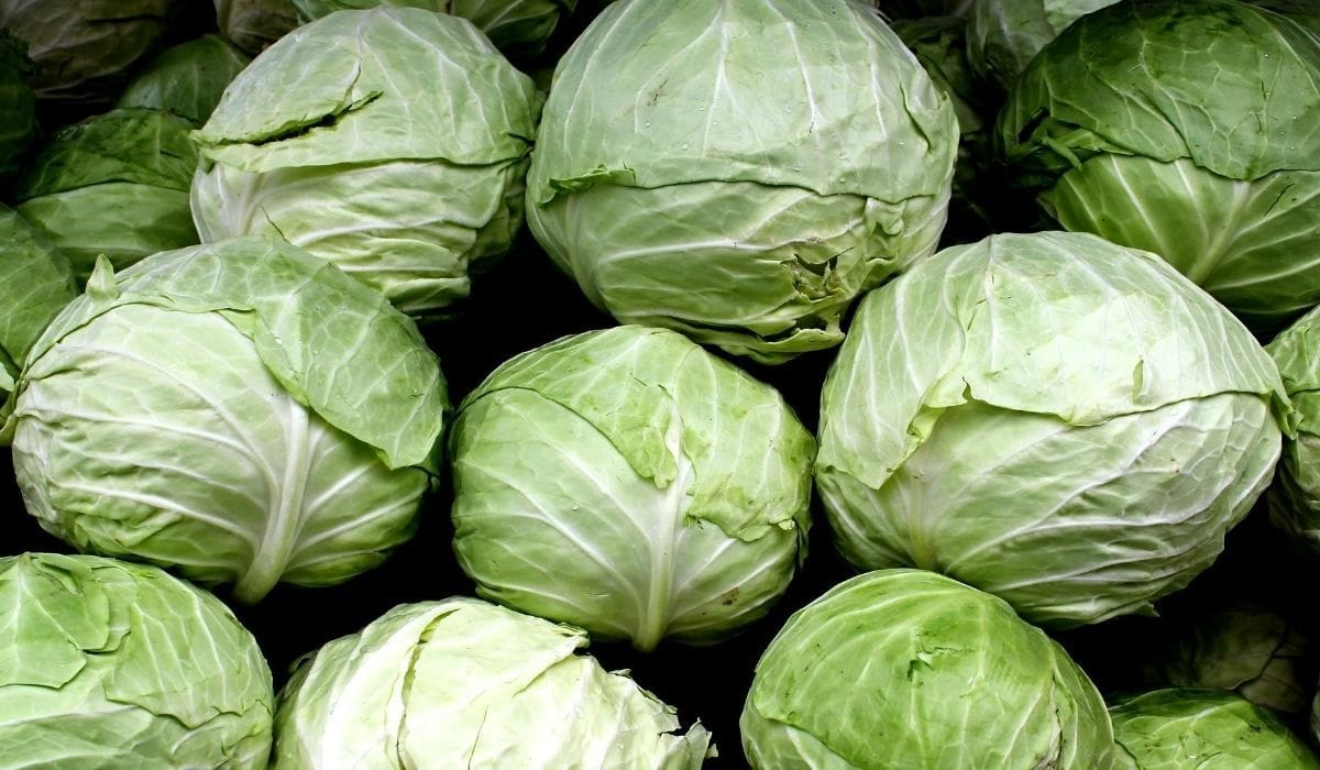 whole cabbage