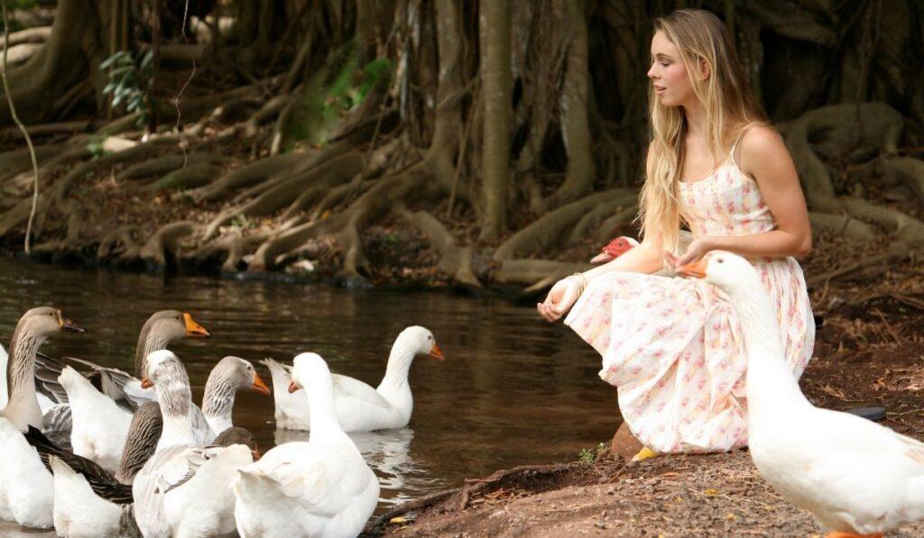 a girl feeding a flock of geese