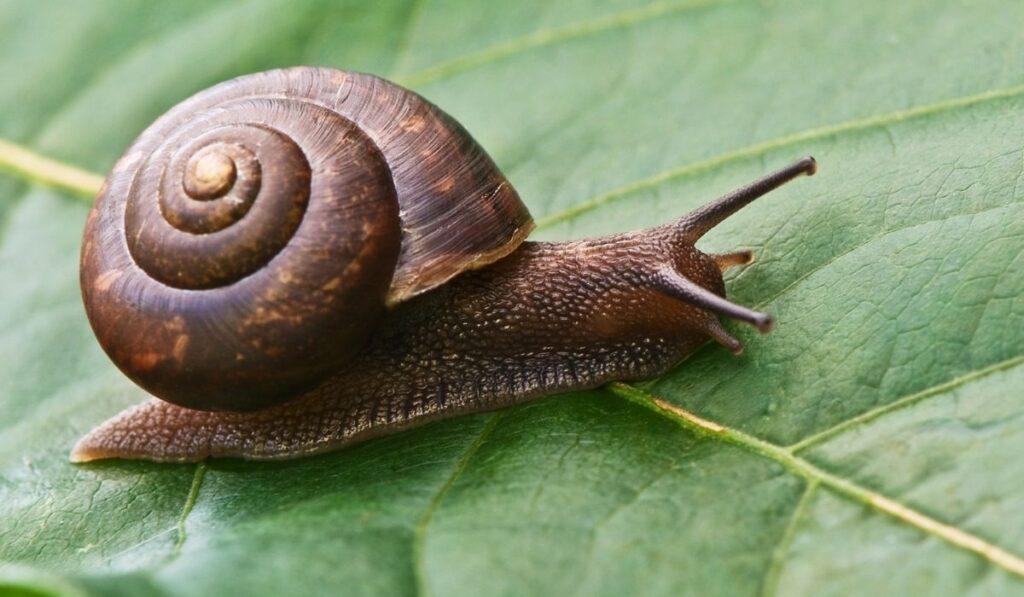 snails on the leaf