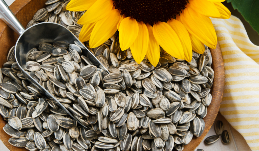 sunflower seeds on a wooden bowl with spoon and sunflower